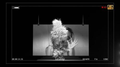 Videohive - Dolce & Banana - 25663493