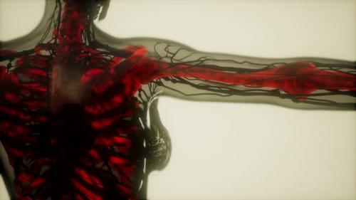 Videohive - Human Skeleton Bones Scan Glowing - 32551371