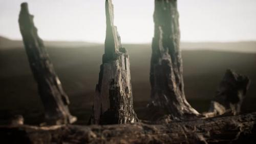 Videohive - Logs and Trunks After the Forest Fire - 33330857